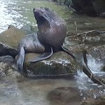 Ohau Waterfall Walk and Seal Pups Foto