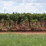 Taste your wine while enjoying the view and smell of the vineyard!