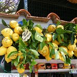 Capri citromok