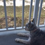 Dog enjoying the spacious balcony.