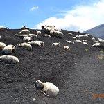 Photo de Mount Etna