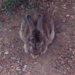 C'è un bellissimo coniglio