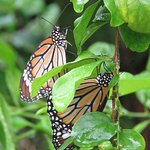 Photo de Banteay Srey Butterfly Centre