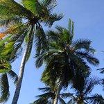 Palm trees near swim up pool