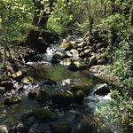 Creek running through park