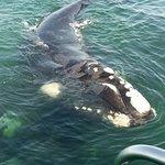 Ivanhoe Sea Safaris Photo