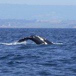 Beautiful Whale.
