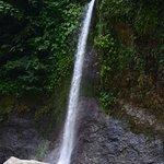 Rios Tropicales Foto