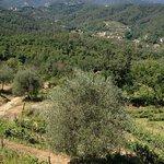 Photo of Agriturismo Cerrolungo