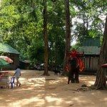 象に乗って回るツアー