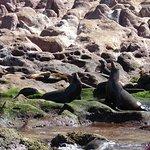 Foto de Sea & Adventures / Mar y Aventuras