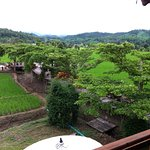 View of the rice field from our balcony