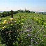 Musella Winery & Country Relais Foto