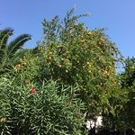 Photo de Bed&Breakfast Masseria Liberatore