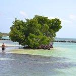 The Punta Cana Resort
