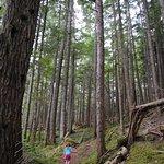 Hai Lake Mount Herman Provincial Park