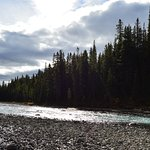 Waterfowl Lake Campground Photo