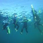 Foto de Bird's Underwater