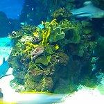 Schöne Korallen