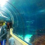Haifischen Habitat