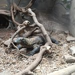 Photo de Crocodile Crossing (at Alligator Farm)