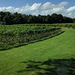 View across the vineyards from the restaurant at Tabor Hill Winery