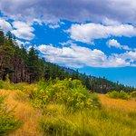 The meadow behind Aspen Loop
