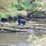 Black Bear Near Margarete Lake