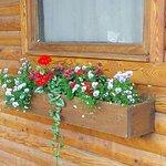 Lovely windowboxes