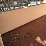 Foto de The Fess Parker - A Doubletree by Hilton Resort