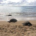 Foto de Oahu Photography Tours