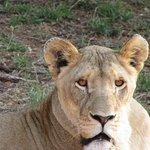 Foto de Zwahili Private Game Lodge & Spa