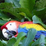 scarlet macaw at the beach