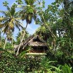Une des villas judicieusement cachée parmi la végétation luxuriante