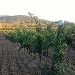 Azienda Agricola Bulichella Foto