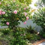 Ar'deco Garden