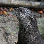Otter im SEA LIFE Timmendorfer Strand
