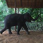 Siam Safari Foto
