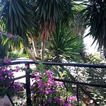 """Lovely view from balcony """"Palm trees and bougainville"""""""
