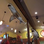 Sharks hanging from ceiling