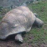 Foto di Artis Zoo