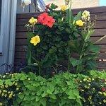 flowers on patio