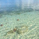 Starfish dotting the shoreline