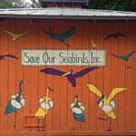 Foto de Save Our Seabirds