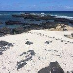Vistas al océano desde el Kaena Point!