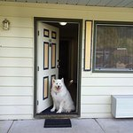 Photo of our dog in the doorway of our pet-friendly room