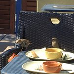 Mr. & Mr.s Starling compete for leftovers at Panera's outdoor patio.