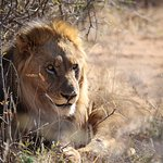 Foto di Mateya Safari Lodge