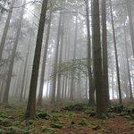 Waldwipfelweg Foto