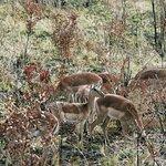 Photo of Game drives at Phalaborwa Gate in Kruger National Park